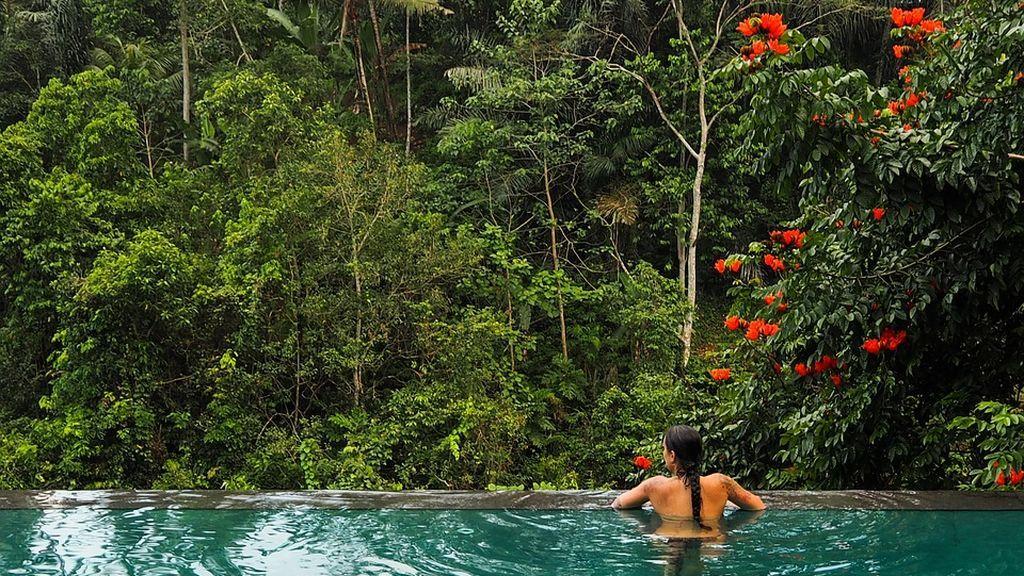 jungle-1920242_960_720