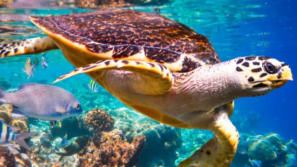 Más de un millón de especies del planeta están ya en peligro de extincióne