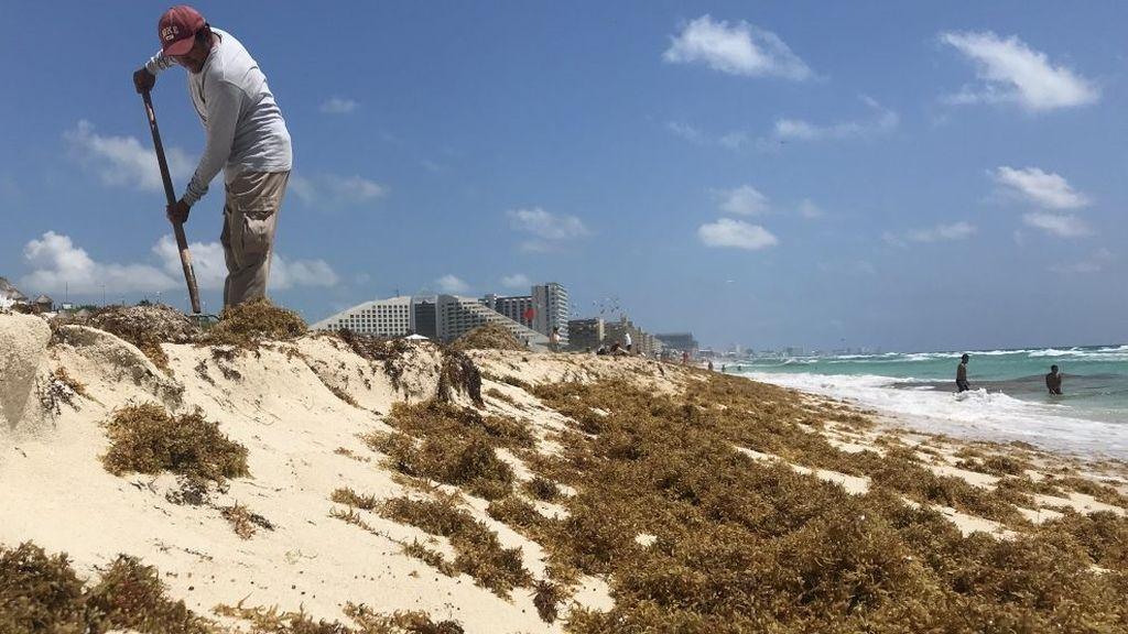 Una ola de algas invade Cancún: sus playas turquesa están más deterioradas que nunca