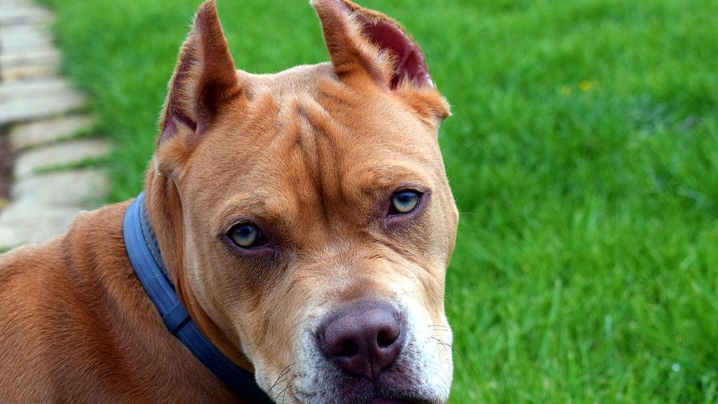 Un perro es llamado para acudir como testigo a un juicio en Tenerife