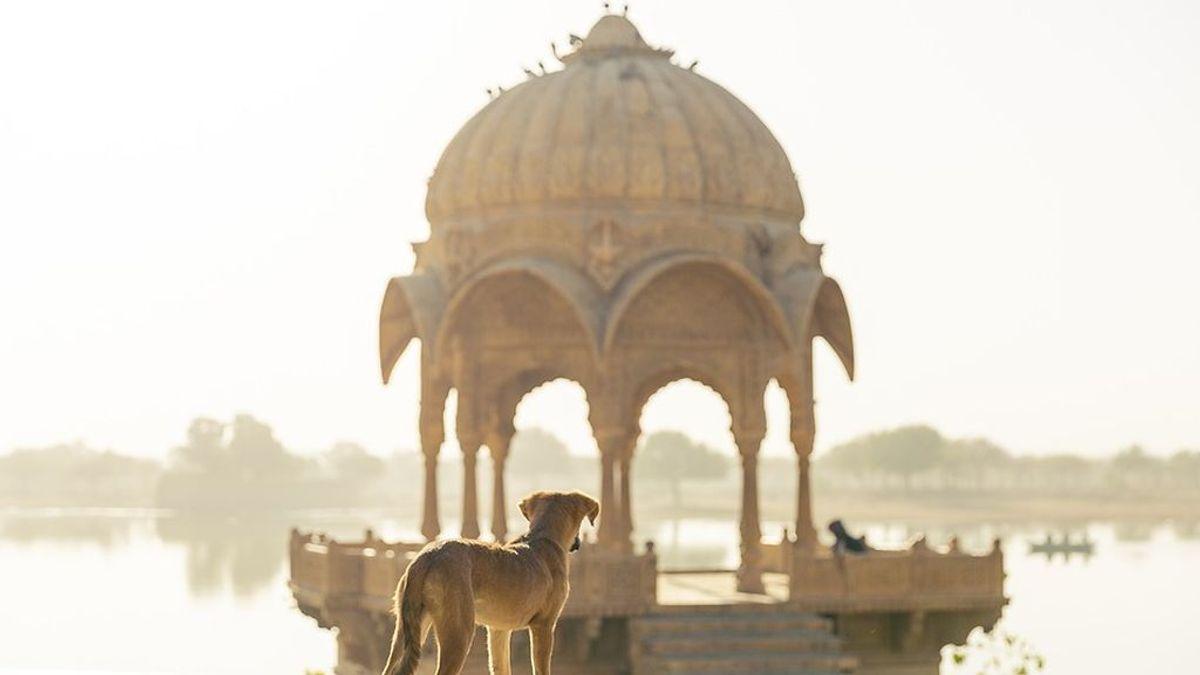 Viajar con perros, todo lo que tienes que saber