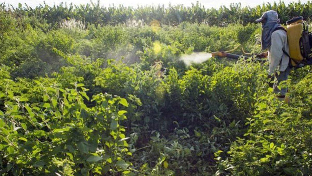 Denuncia que las autoridades españolas dan autorizaciones ilegales para usar pesticidas tóxicos prohibidos