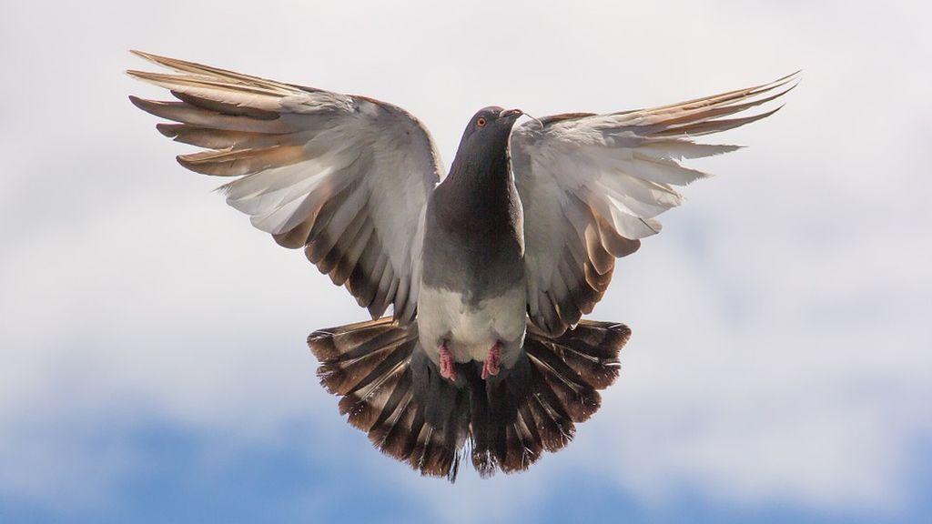 """Un radar capta el vuelo de una paloma por """"exceso de velocidad"""""""