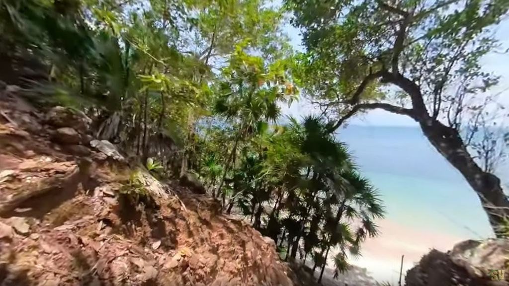 Adéntrate en la selva de Playa Uva con nuestras cámaras 360º