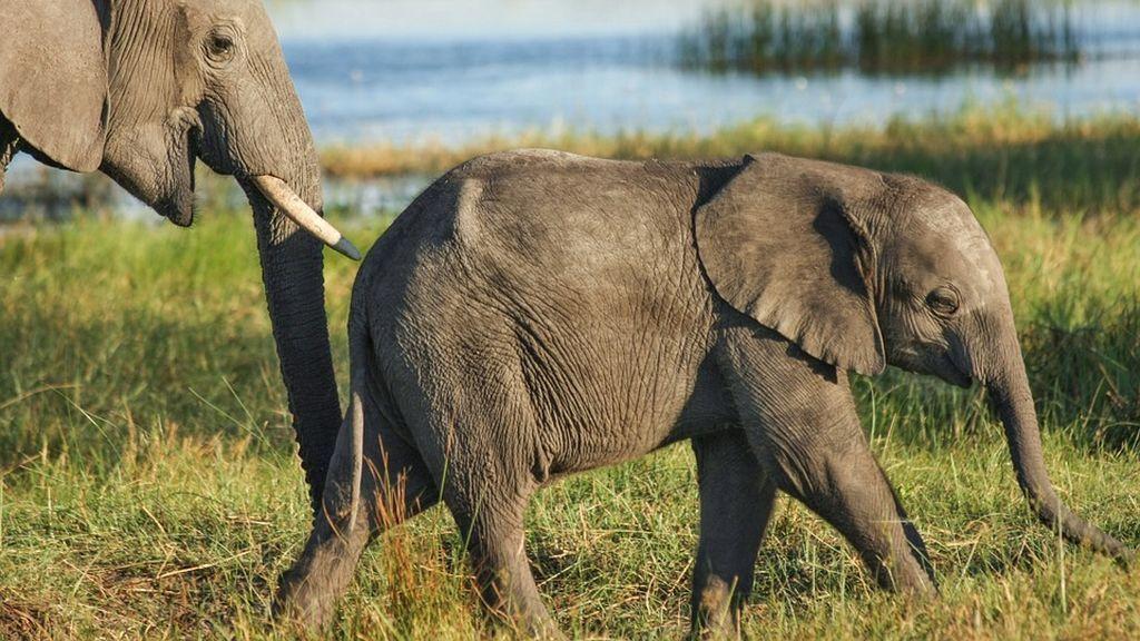 Una elefanta ataca mortalmente a un hombre que fotografiaba a su cría sin vida