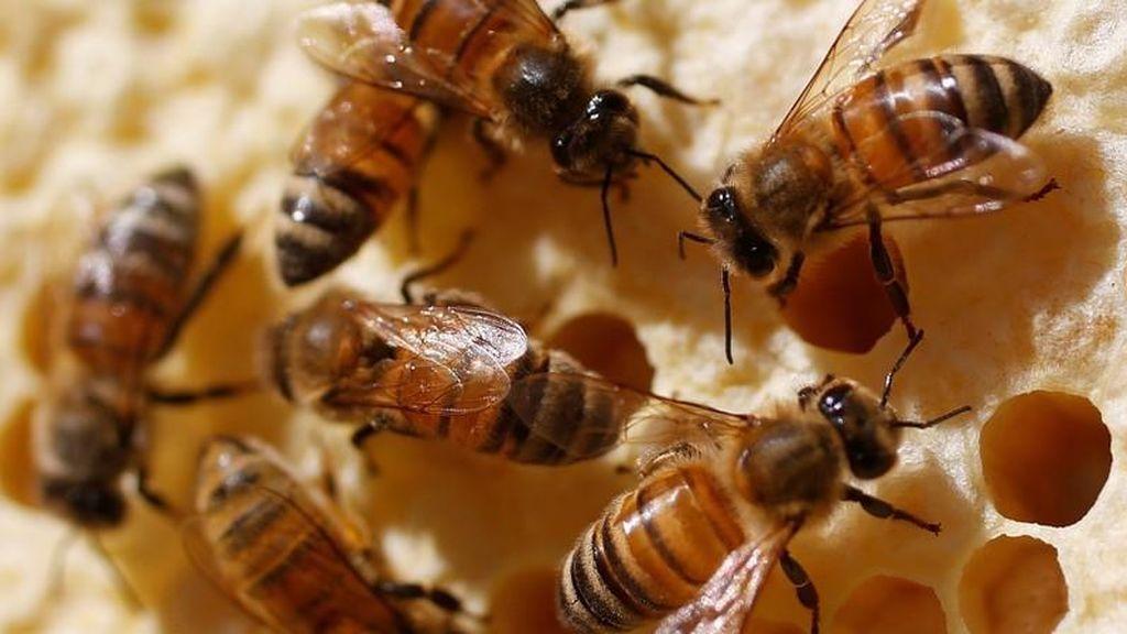 Ecologistas ponen el grito en el cielo para conservar a las abejas
