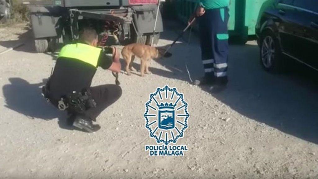 Capturado uno de los cinco perros que atacaron a un hombre en Málaga