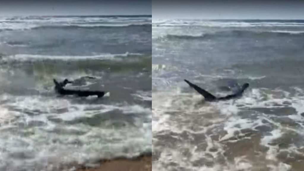 El increíble 'encuentro' entre un surfista y un tiburón en una playa del Golfo de Vizcaya
