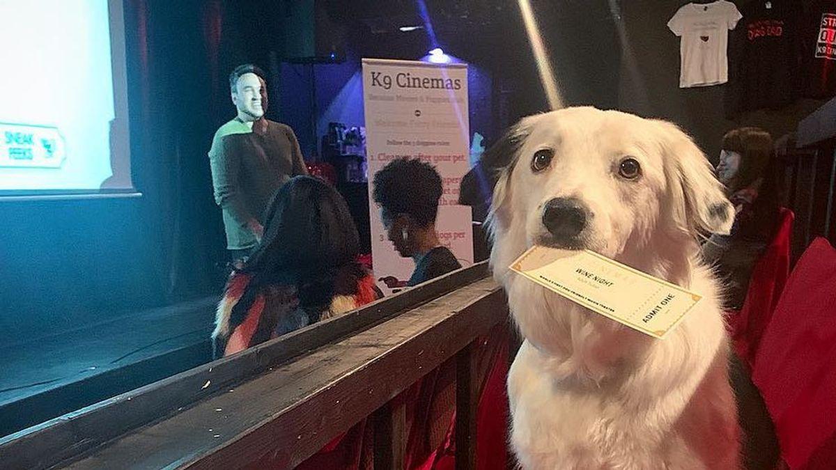 Ir al cine con tu perro: un plan ideal que ya puede ser realidad