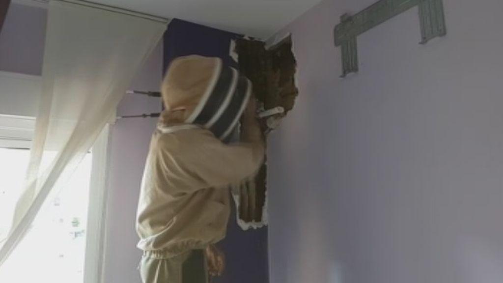 Un matrimonio estuvo dos años durmiendo con un panal de 80 mil abejas en su dormitorio sin darse cuenta
