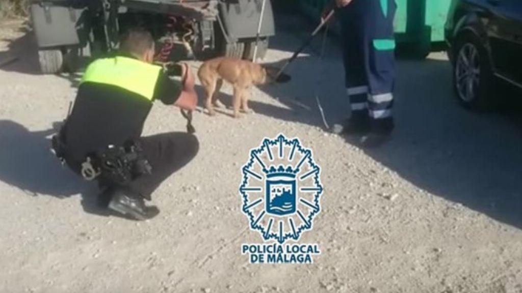 Más de once disparos fueron necesarios para que los perros  abandonados de Málaga, ya capturados, no descuartizaran a  un hombre