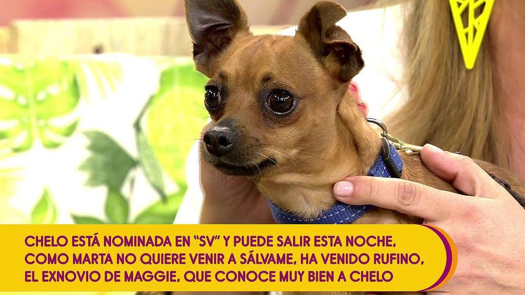 Rufino, el exyerno de Chelo Gª Cortés, visita el plató de Sálvame para 'ladrar' por la salvación de la concursante en 'Supervivientes'