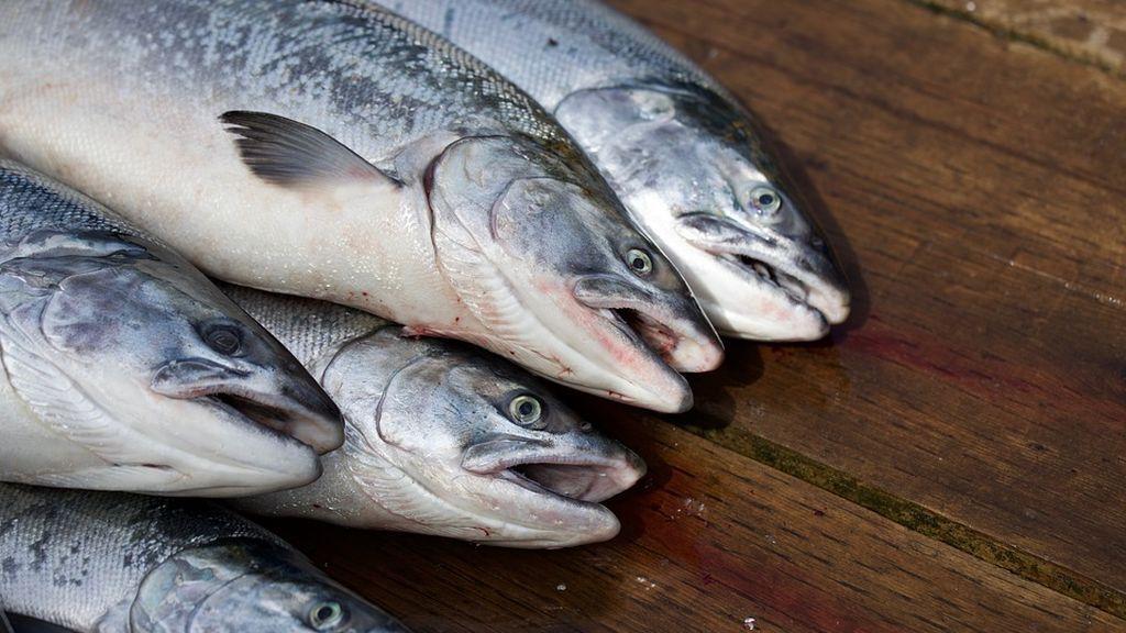 Mueren ocho millones de salmones en Noruega en una semana por un aumento repentino de algas