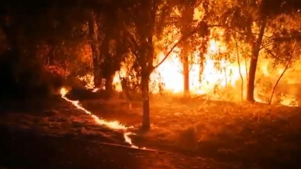 Provocan un incendio en Palencia tras quemar las pelusas de los chopos de un parque