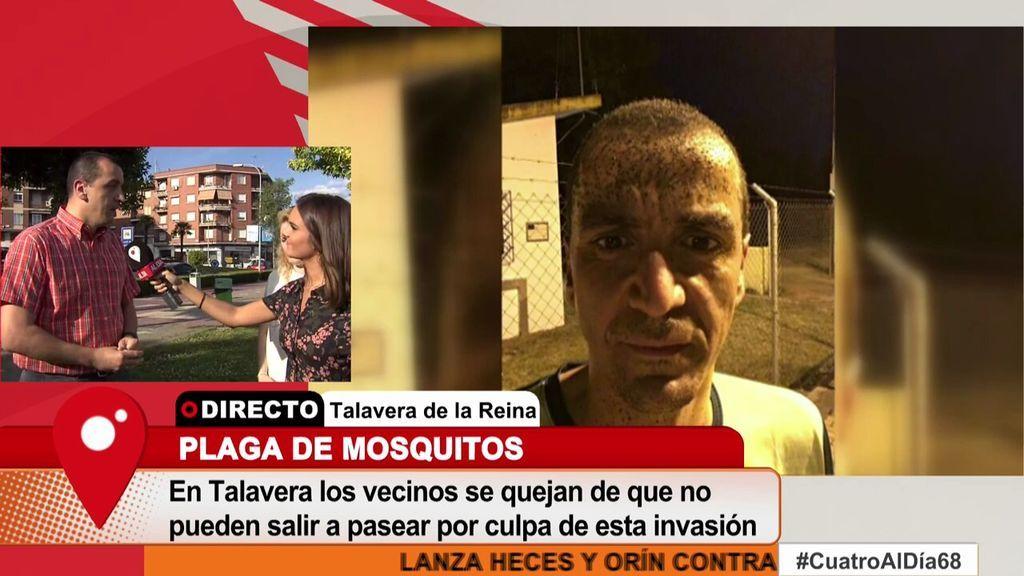 """Talavera de la Reina, """"invadida"""" de mosquitos por el bajo caudal del río Tajo"""