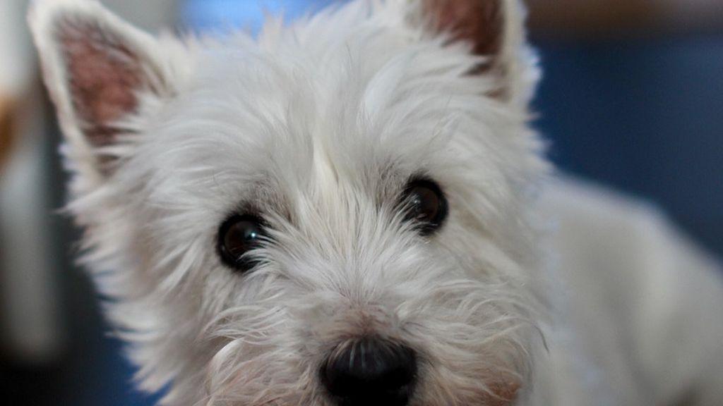 La custodia compartida llega al mundo animal: un perro pasará 6 meses con cada uno de sus dueños