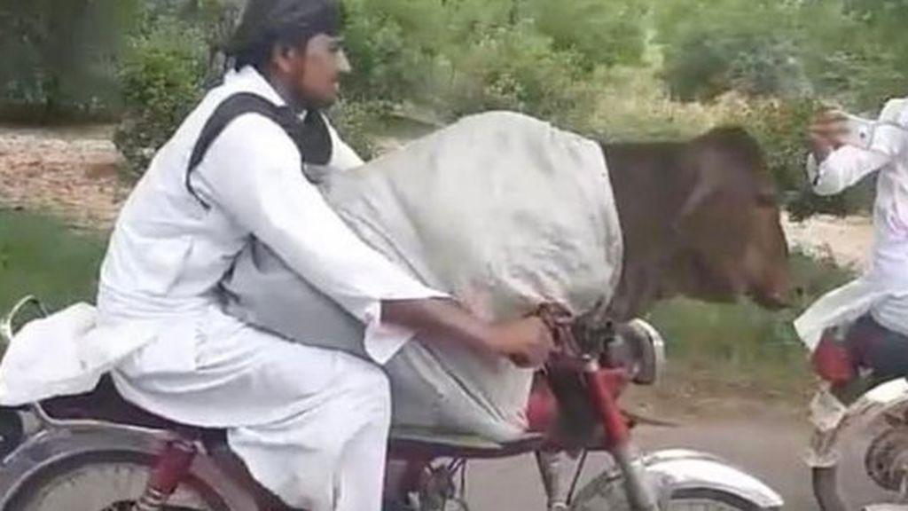 Un paquistaní pasea con una vaca en su moto, sin casco y a toda velocidad