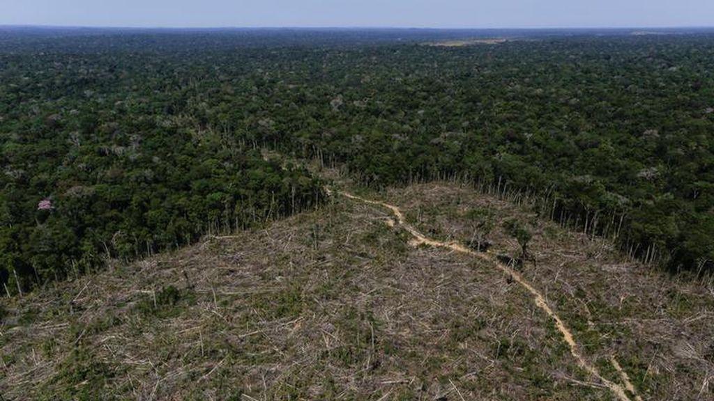 El Amazonas alcanza el 20 % de deforestación a su paso por Brasil según un estudio realizado