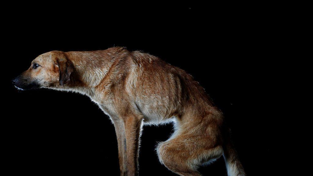 Detenida por dejar morir de hambre a su perro en Alicante