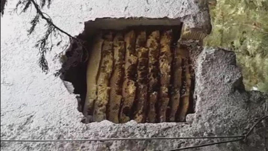 Retiran un panal con 100.000 abejas en un muro de Albaicín que era el temor de los vecinos