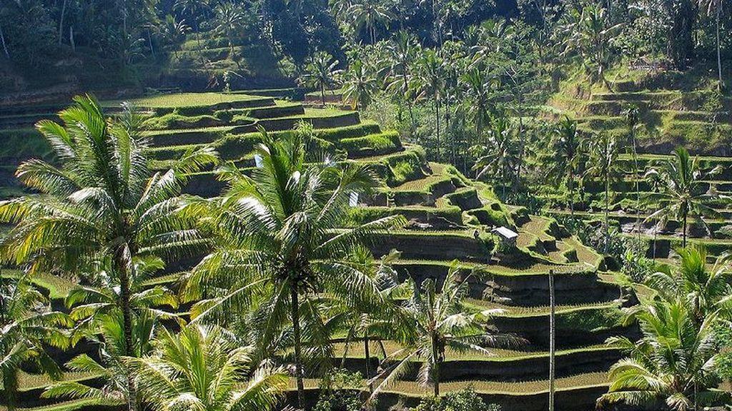 800px-Bali_panorama