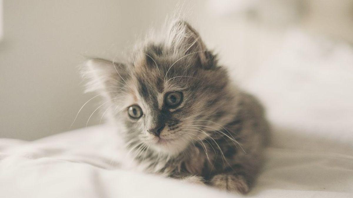 Beneficios para la salud de 'tener un gato'