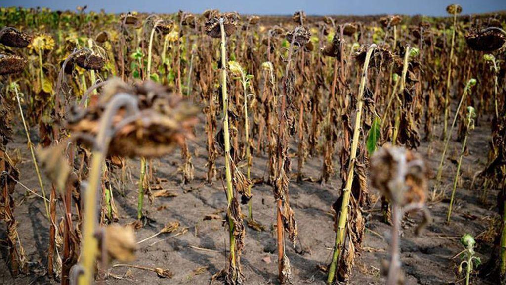 El cambio climático ya ha afectado a la producción de alimentos