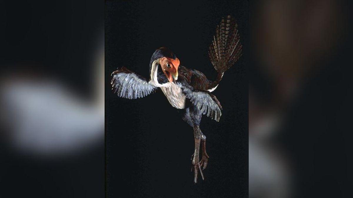 ¿Qué fue antes, las plumas o las aves?