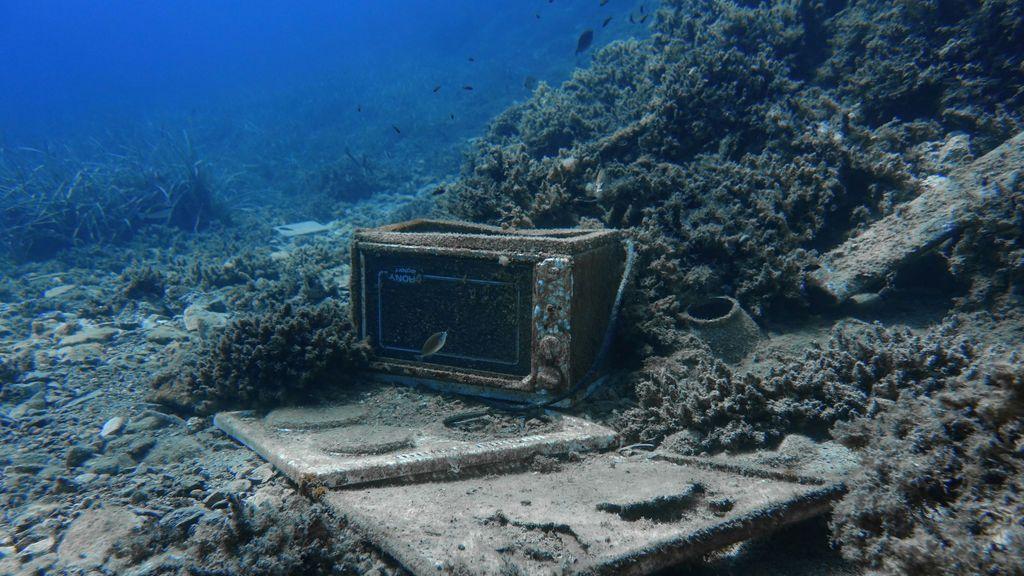 La contaminación mata la biodiversidad de los océanos
