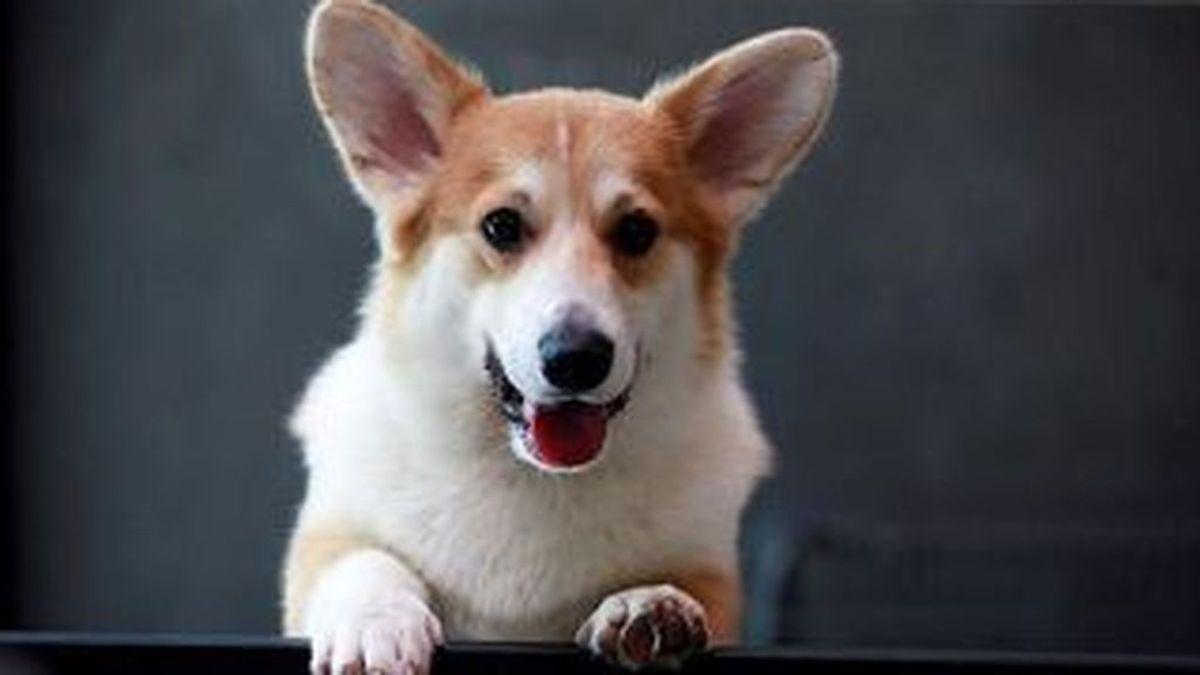 Los perros pueden reconocer si les estamos mintiendo, según demuestra un estudio