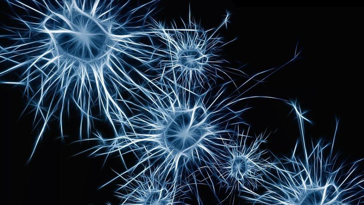 neurons-1773922_960_720