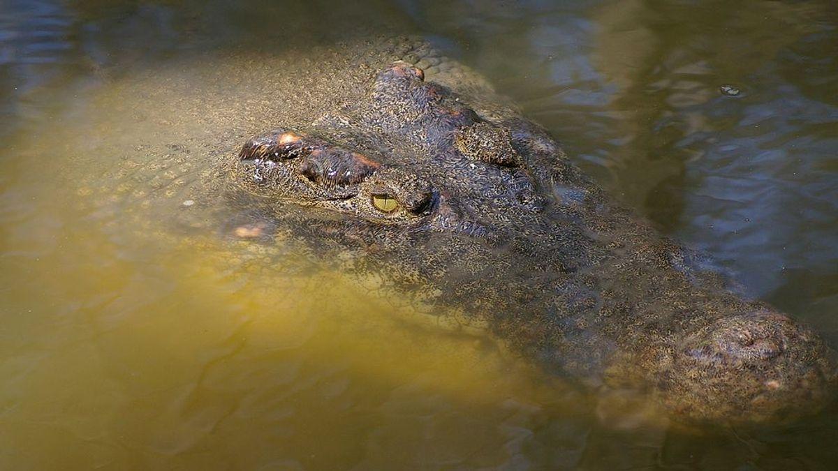 Encuentran en Australia  el cuerpo sin vida de un niño cerca de aguas infestadas de cocodrilos