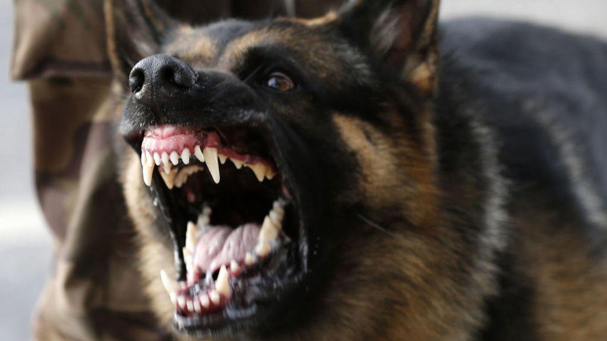 Muere una mujer por los mordiscos en el cuello y la mano de un perro que atacó a su mascota