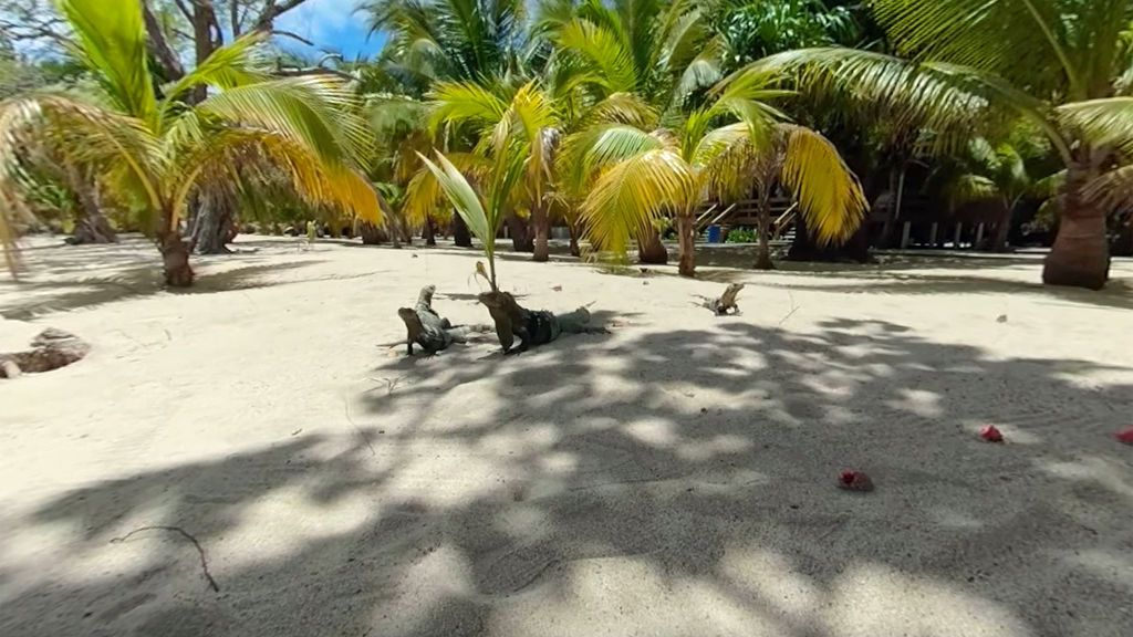 Paseo en 360º: siéntete un auténtico superviviente y rodéate de iguanas en Cayo Menor