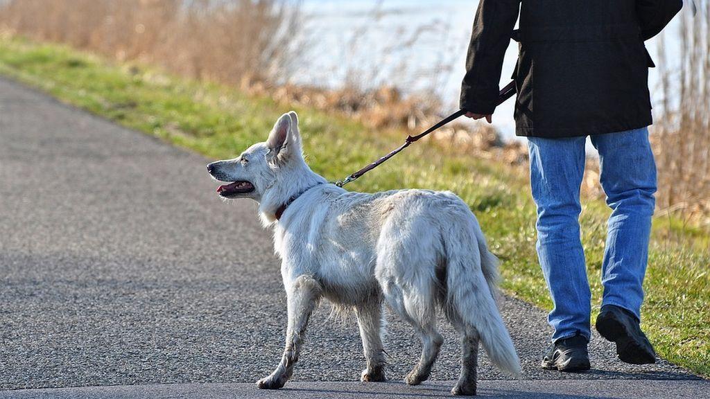 Un ayuntamiento contrata detectives para multar a personas que no recojan las heces de su mascota
