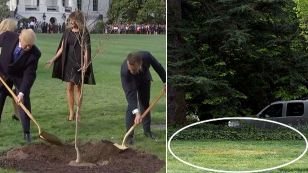 Muere el 'árbol de la amistad' plantado por Trump y Macron en la Casa Blanca