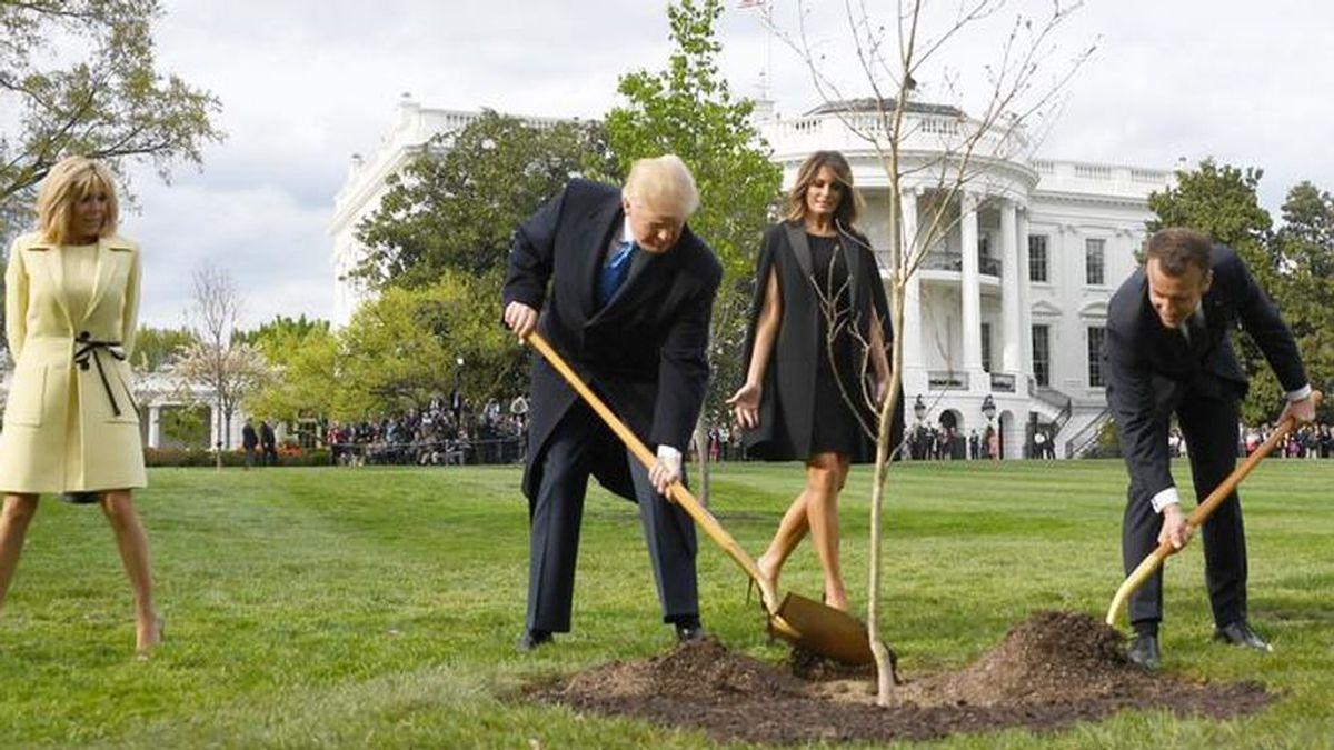 Los árboles más famosos de la Casa Blanca
