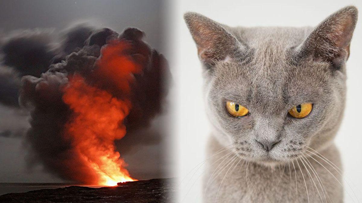 El doctor que lo peta en redes explicando el comportamiento de los volcanes con gatitos
