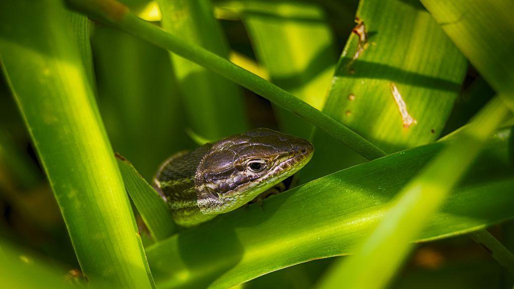 Investigadores descubren un nuevo proceso de formación de especies