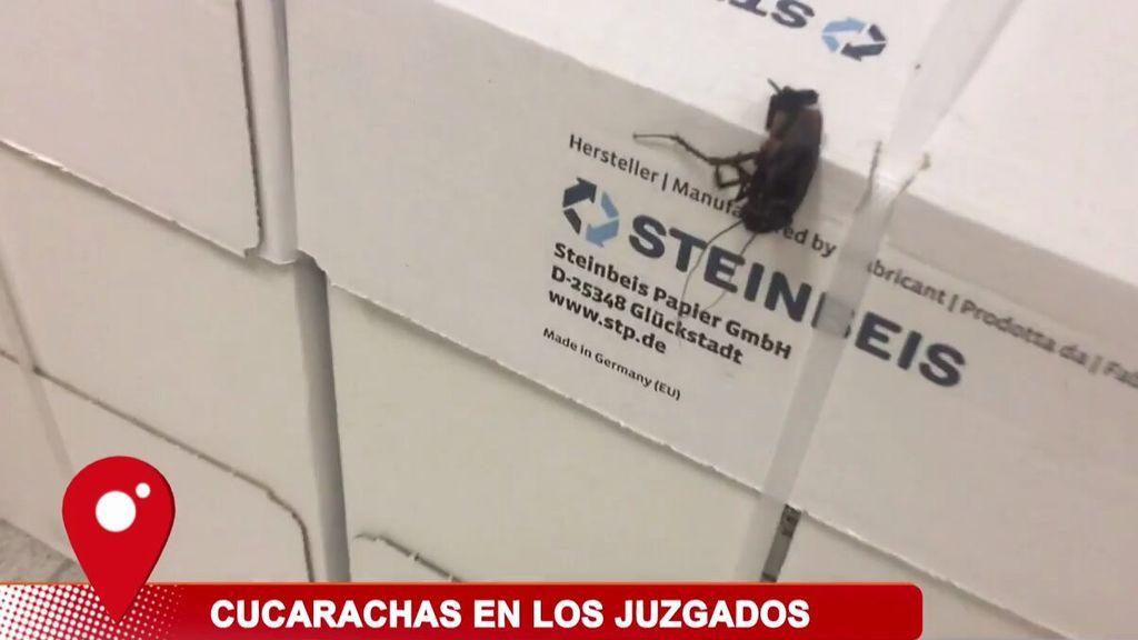 Las cucarachas invaden y siembran el pánico en los juzgados de Ontynient (Valencia)