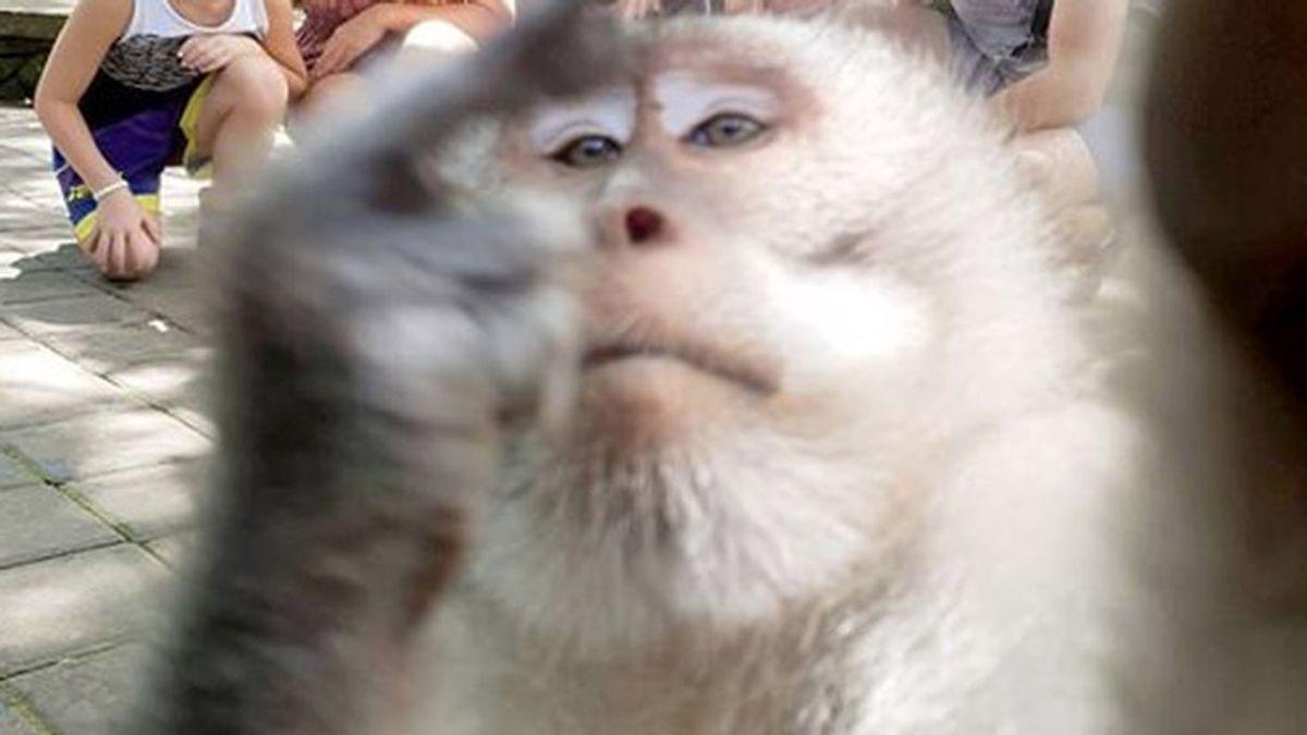 Un mono hace un selfie con una familia humana y se vuelve viral