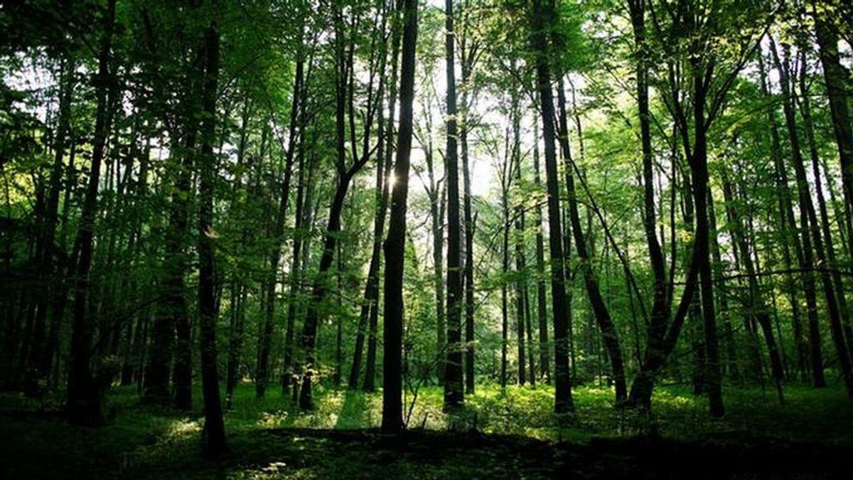 Pasar dos horas en la naturaleza mejora significativamente la salud, según un estudio