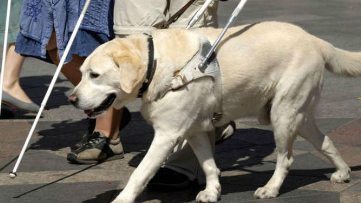 Multan a la cuidadora de un perro guía por pasear por la playa
