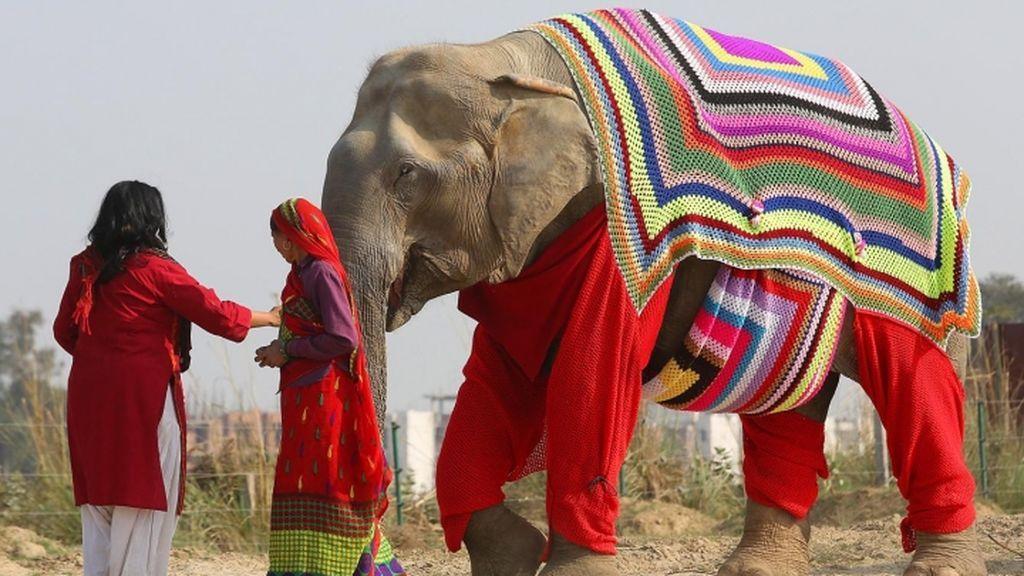 Confeccionan en la India pijamas y chalecos para proteger a los elefantes del frío