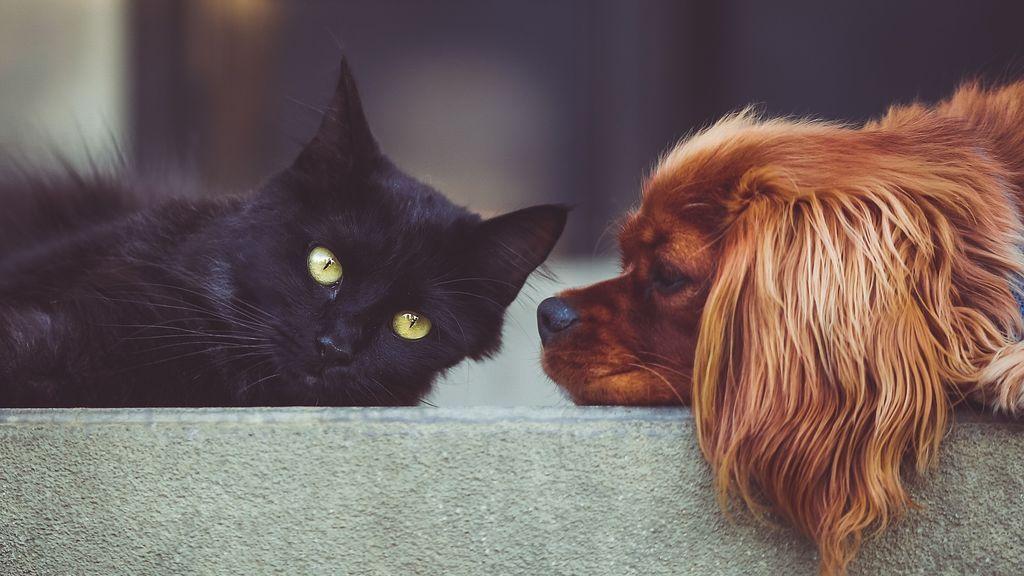 Como perros y gatos: responde a este test y te decimos qué serías