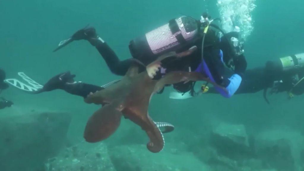 Un pulpo gigante ataca a un submarinista