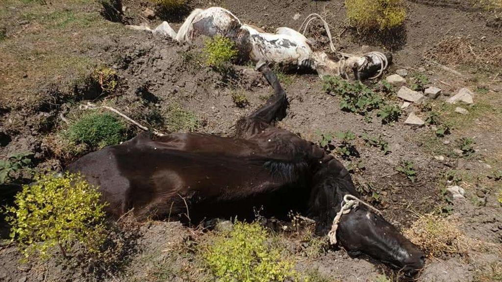 Desagradable episodio de caballos muertos en Jimena de la Frontera (Cádiz)