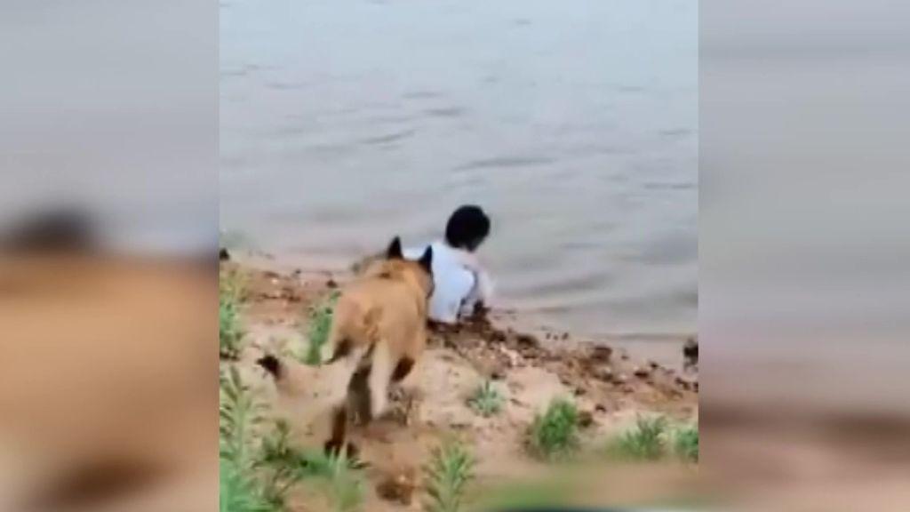 El perro que evitó que una niña cayera a un lago y se convirtió en su ángel de la guarda