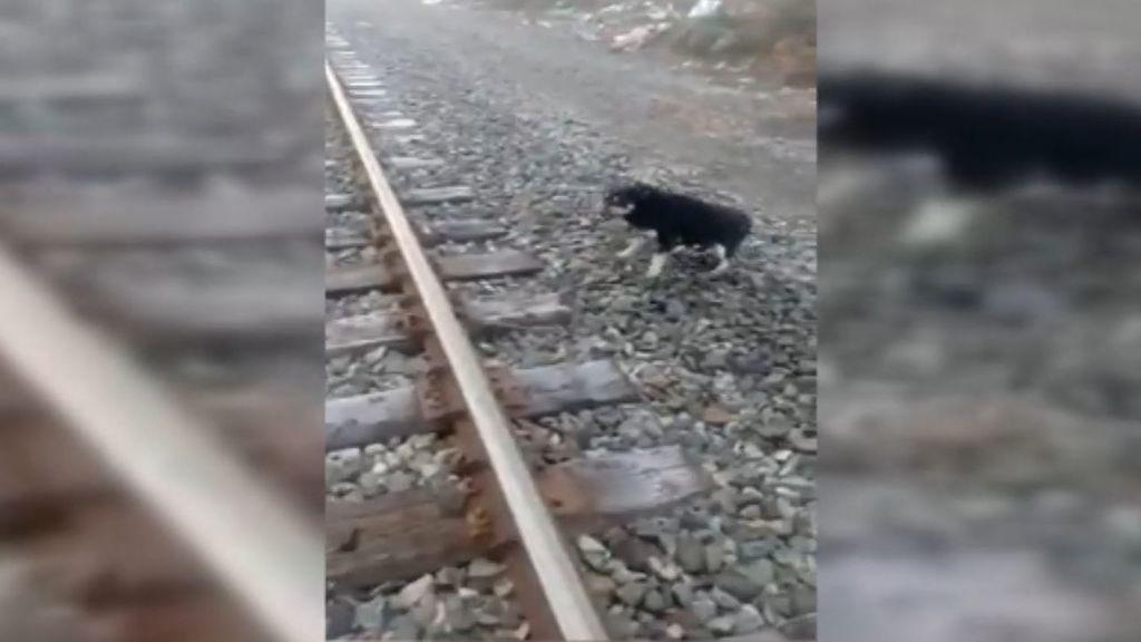 Un maquinista detiene un tren para salvar la vida a un perro
