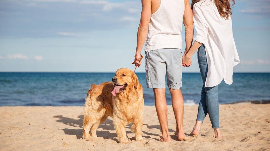 Los viajes 'dog-friendly', tendencia al alza y oportunidad de negocio por explotar en España